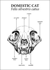Aluminium print  Skull of the domestic cat - Velozee