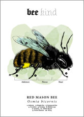 Aluminium print  Anatomy of a red mason bee - Velozee