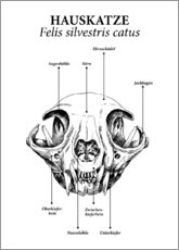 Wood print  Skull of the domestic cat - Velozee