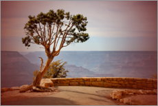 Premium poster  Tree over the Grand Canyon - fotoping