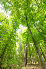 Premium poster Big green forests
