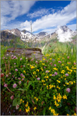 Premium poster Wildflowers at the Grossglockner
