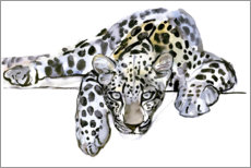 Foam board print  Arabian Leopard - Mark Adlington