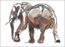 Premium poster Study of an elephant