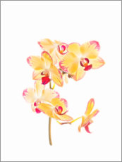 Wall sticker  Yellow orchid