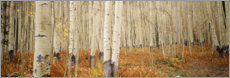 Wood print  Autumnal birch forest