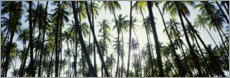 Foam board print  Palm grove