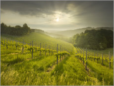 Premium poster Vineyard in Southern Styria