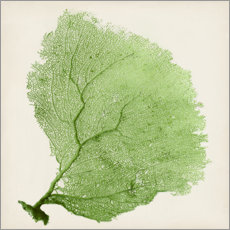Wall sticker Sea fan green