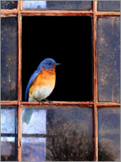 Premium poster Bluebird at the window