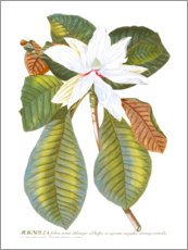 Wood print  Magnificent Magnolia II - Jacob Trew