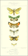 Wood print  Pauquet Butterflies II