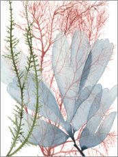 Canvas print  Sea weeds I - Grace Popp