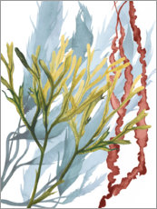 Gallery print  Sea weeds II - Grace Popp