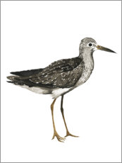 Wall sticker  Sandpiper II - Grace Popp