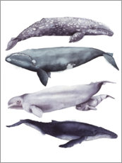 Premium poster Whales II