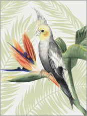 Canvas print  Cockatiel II - Grace Popp