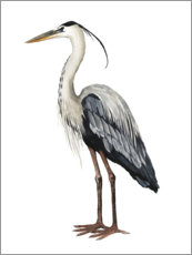 Premium poster  Great Blue Heron - Grace Popp