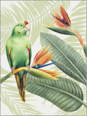 Acrylic print  Amazon parrot - Grace Popp