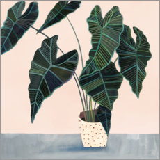 Premium poster Alocasia in dotted pot