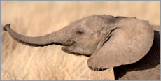 Wood print  Elephant calf in the savannah