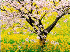 Wood print  Flowering cherry tree in mustard field