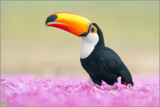 Foam board print  Toucan in the sea of flowers