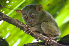 Foam board print  Cute Tarsier - nitrogenic