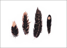 Gallery print  Ink and rose gold feathers - Ella Tjader