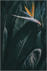 Aluminium print  Bird of paradise - Amy and Kurt