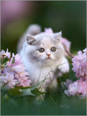 Foam board print  Kitten on a flower meadow - Janina Bürger