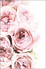 Acrylic print  Pink Peonies - Art Couture