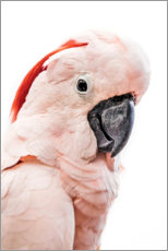 Premium poster  Pink Cockatoo - Art Couture