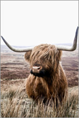Gallery print  Brown Highland Cattle - Art Couture