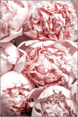 Premium poster  Salmon-colored peonies - Art Couture