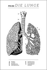 Acrylic print  Lungs Vintage Chart (German) - Wunderkammer Collection