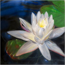 Premium poster Waterlilly-white