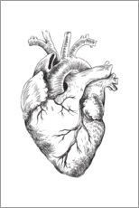 Premium poster Anatomical Heart