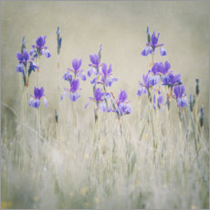 Premium poster Lily meadow