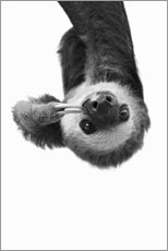 Acrylic print  Hang Out - Sloth - Sisi And Seb