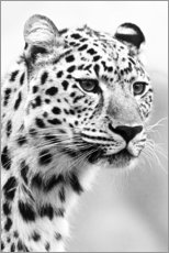 Acrylic print  Jaguar - Art Couture