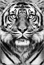 Wood print  Majestic Tiger - Sisi And Seb