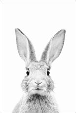 Canvas print  Curious rabbit - Sisi And Seb