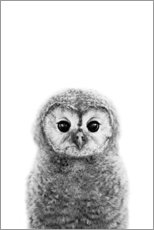 Wood print  Young owl - Art Couture