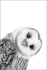 Wall sticker  Snow Owl - Art Couture