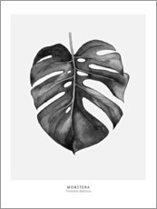 Premium poster Monstera leaf illustration