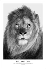 Canvas print  Kalahari Lion - Art Couture
