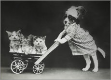 Foam board print  Kitten in carriage, vintage