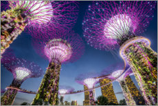 Premium poster  Supertrees in Singapore - Jan Christopher Becke