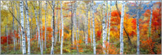 Acrylic print  Birch forest in autumn